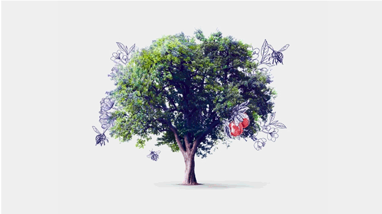 a tree; image used for HSBC LK Premier health and beauty offer page